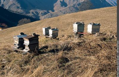 ruches à Saint-Martin-de-Belleville