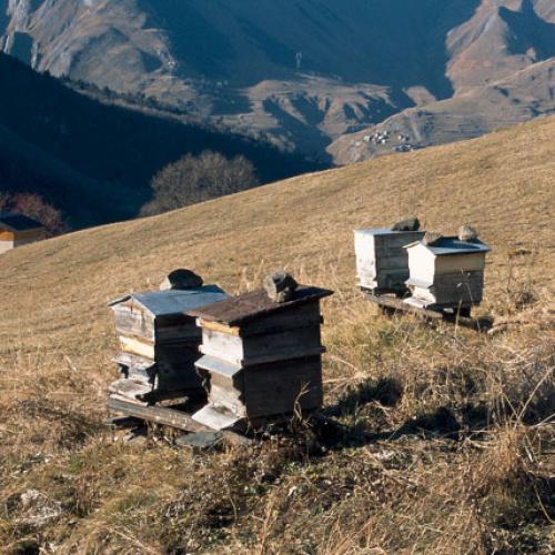 © Parc national de la Vanoise