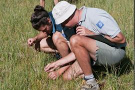 Mise en oeuvre du protocole de suivi du Caricion par les agents du Parc national