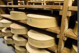 Meules de fromage beaufort