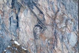 Aire de la Daille photographiée un mois après la naissance d'un jeune gypaète barbu, sur laquelle on peut apercevoir un individu adulte.