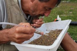 Collecte d'insectes avec un aspirateur à bouche pour leur identification; © PNV - K. Moussiegt