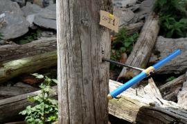 Prélèvement de bois au Chatelard
