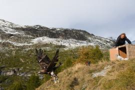 "L'aigle ""Plumas"" est très vite sorti et a immédiatement pris son envol © PNV - Christophe Gotti"